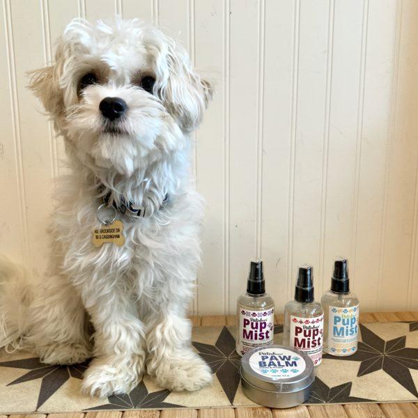 Au Natural Dog